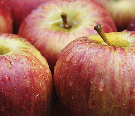 Bio-Früchte im Stadtladen St.Gallen